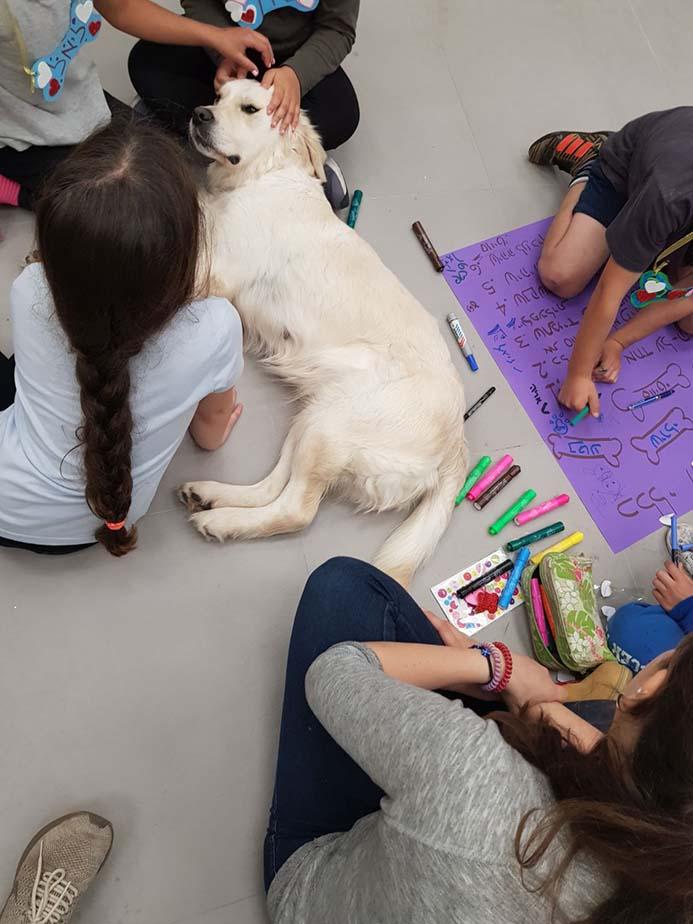 יתרונות של טיפול באמצעיות כלבים